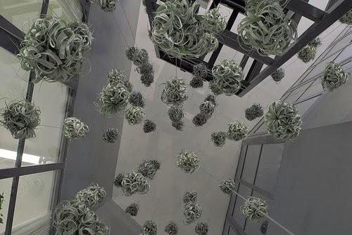 plantas epifitas