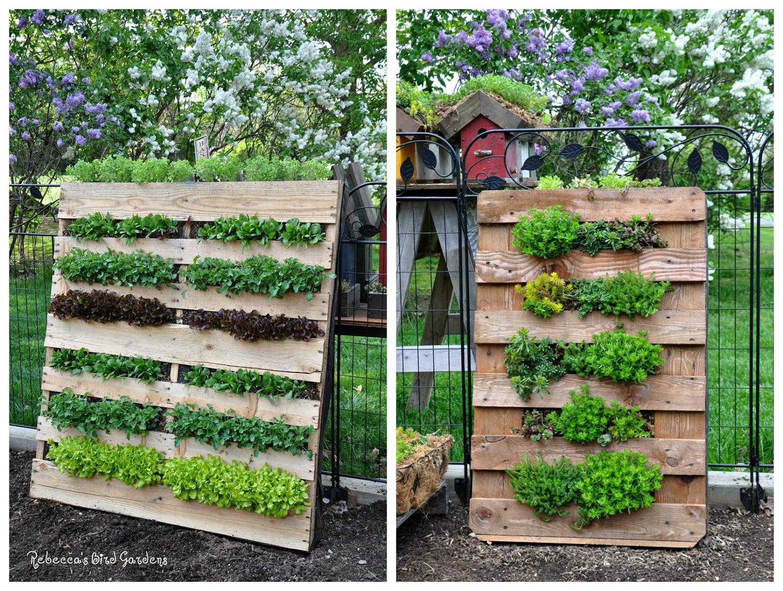 Rebecca S Bird Gardens Blog Diy Vertical Pallet Garden