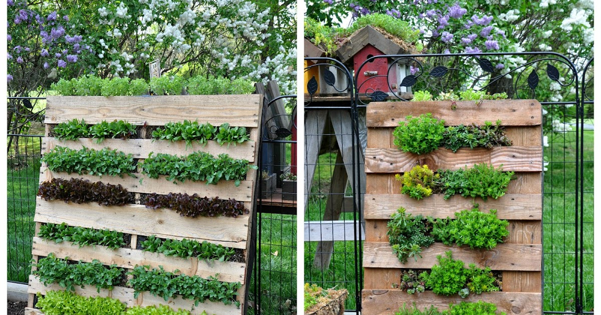 Rebecca\'s Bird Gardens Blog: DIY Vertical Pallet Garden