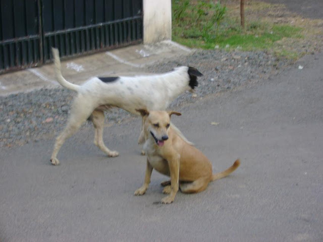 Street Dog Complaints Chennai