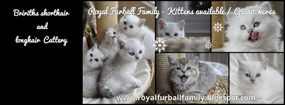 Royal Furball Family