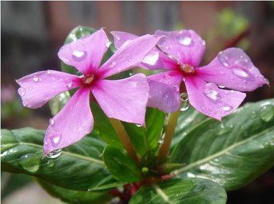 Bunga hidup