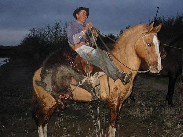 Fotos de caballos criollos en argentina 100