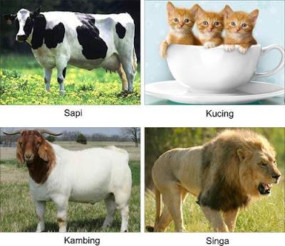 Perkembangbiakan Manusia, Hewan, Tumbuhan dan Gambarnya