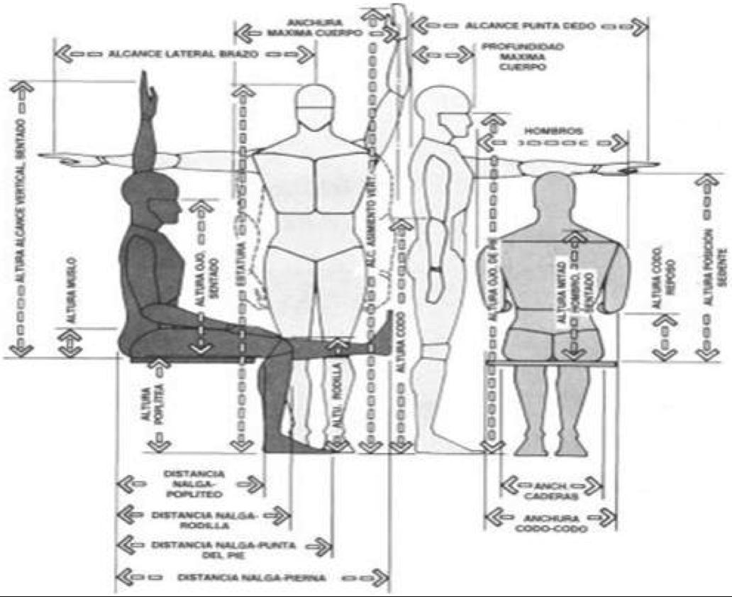 Proyecto ergonomia antropometr a din mica for Medidas en arquitectura pdf