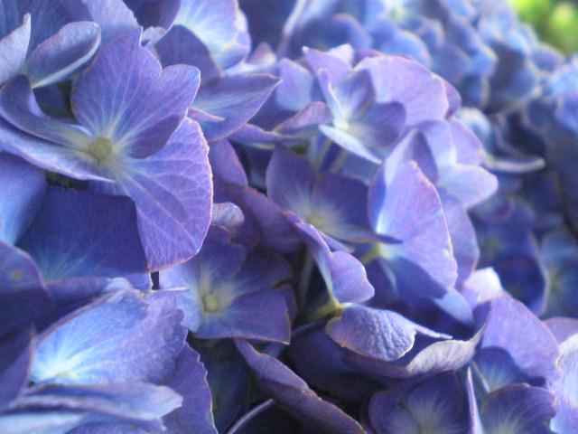 Matrimonio Lilla E Azzurro : Il giardino sfumato matrimonio bianco lilla