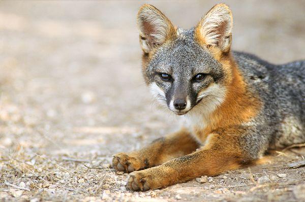 rarest animals in the - photo #29