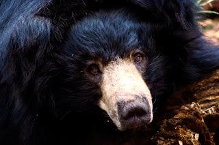 Bear Sloth Wallpapers