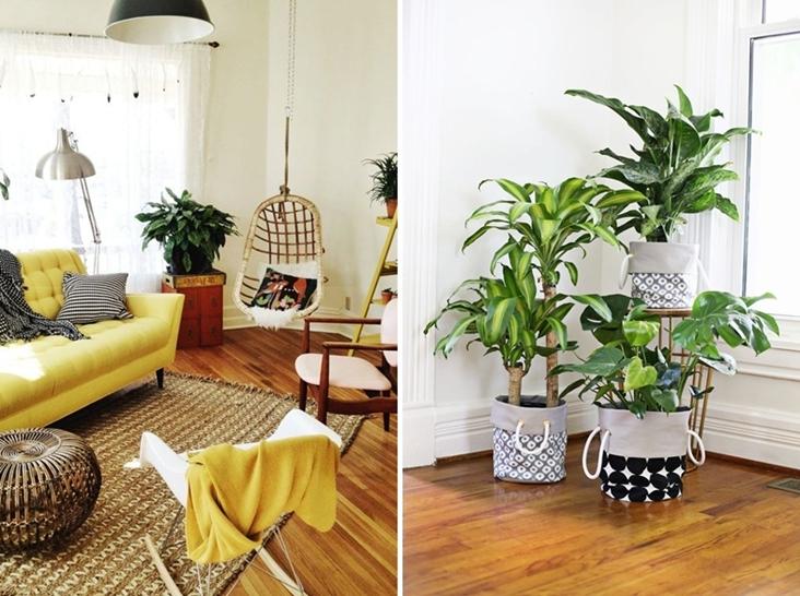 Plantas para alegrar el hogar decorar tu casa es - Plantas para salon ...