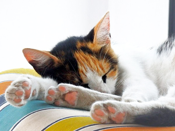 multi-colored cat sleeping