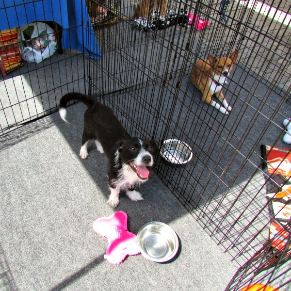 Jack London Square // East Bay SPCA Adoptathon Happy Puppy