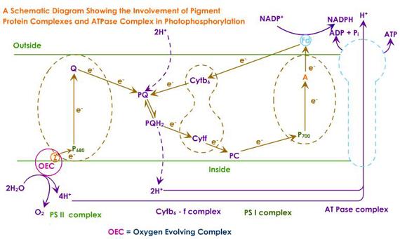 Phd presentation example for beginner