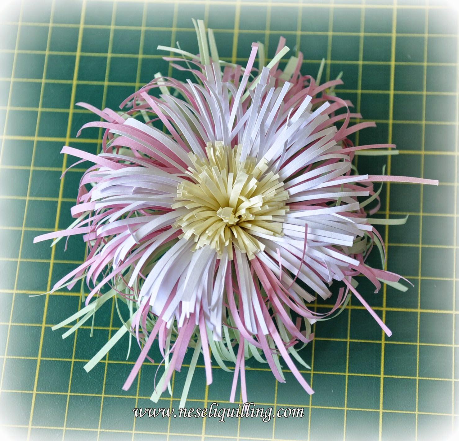 neseli quilling fringed flower