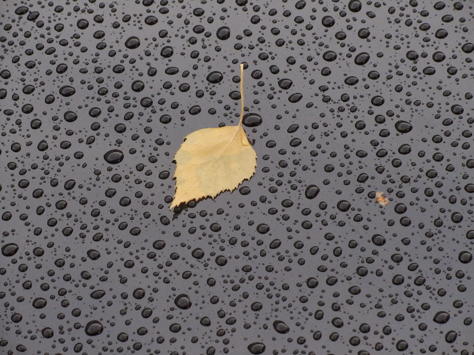 raindrops and yellow leaf on a black car