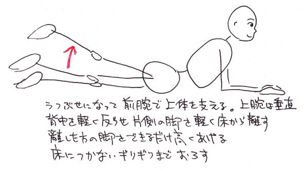 身体の学校・安部塾公式ブログ 身体操作指導者 安部吉孝: 美尻をつくるエクササイズ(その5 プローン・ヒップエクステンション)