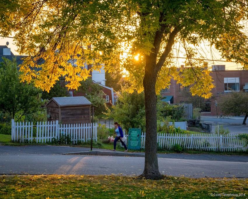 Portland, Maine September 2014 Bayside neighborhood community garden and sunset foliage on Chestnut Street photo by Corey Templeton