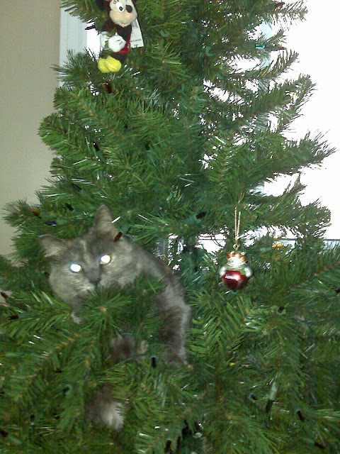 Vasey Cat and a Christmas Tree