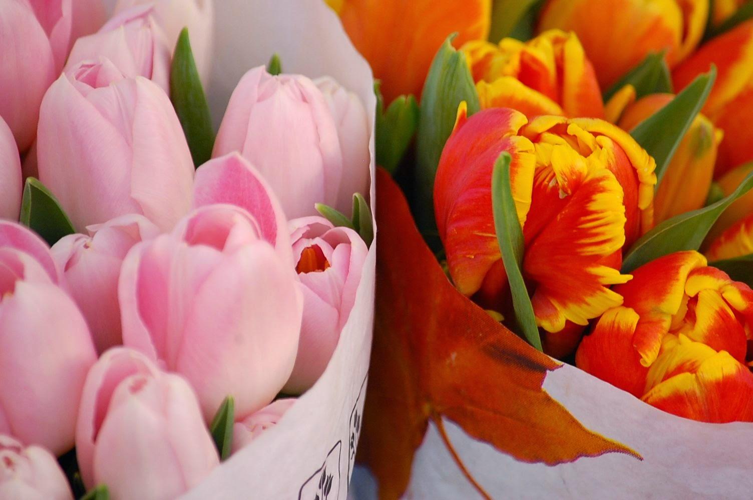 tulips campo di fiori rome italy
