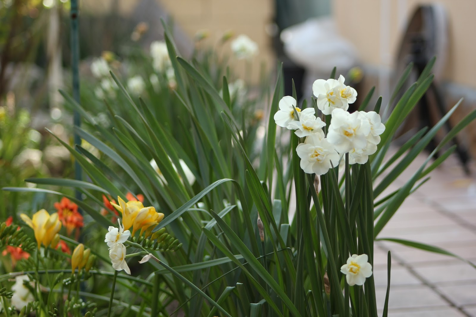 Arte y jardiner a flores y plantas de arte y jardiner a - Plantas de jardin fotos ...