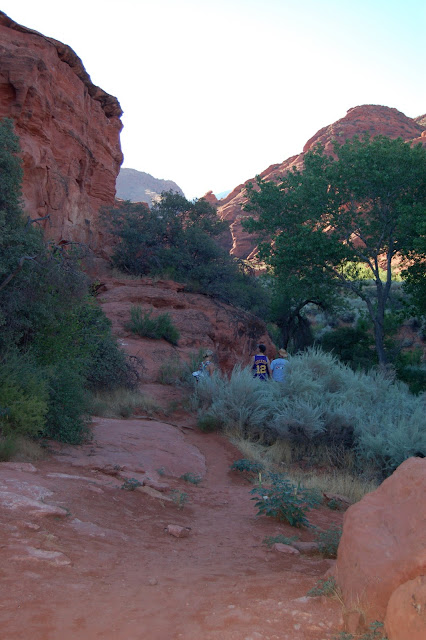 Green Trees and Bushes Really Contrast with the Red Cliffs