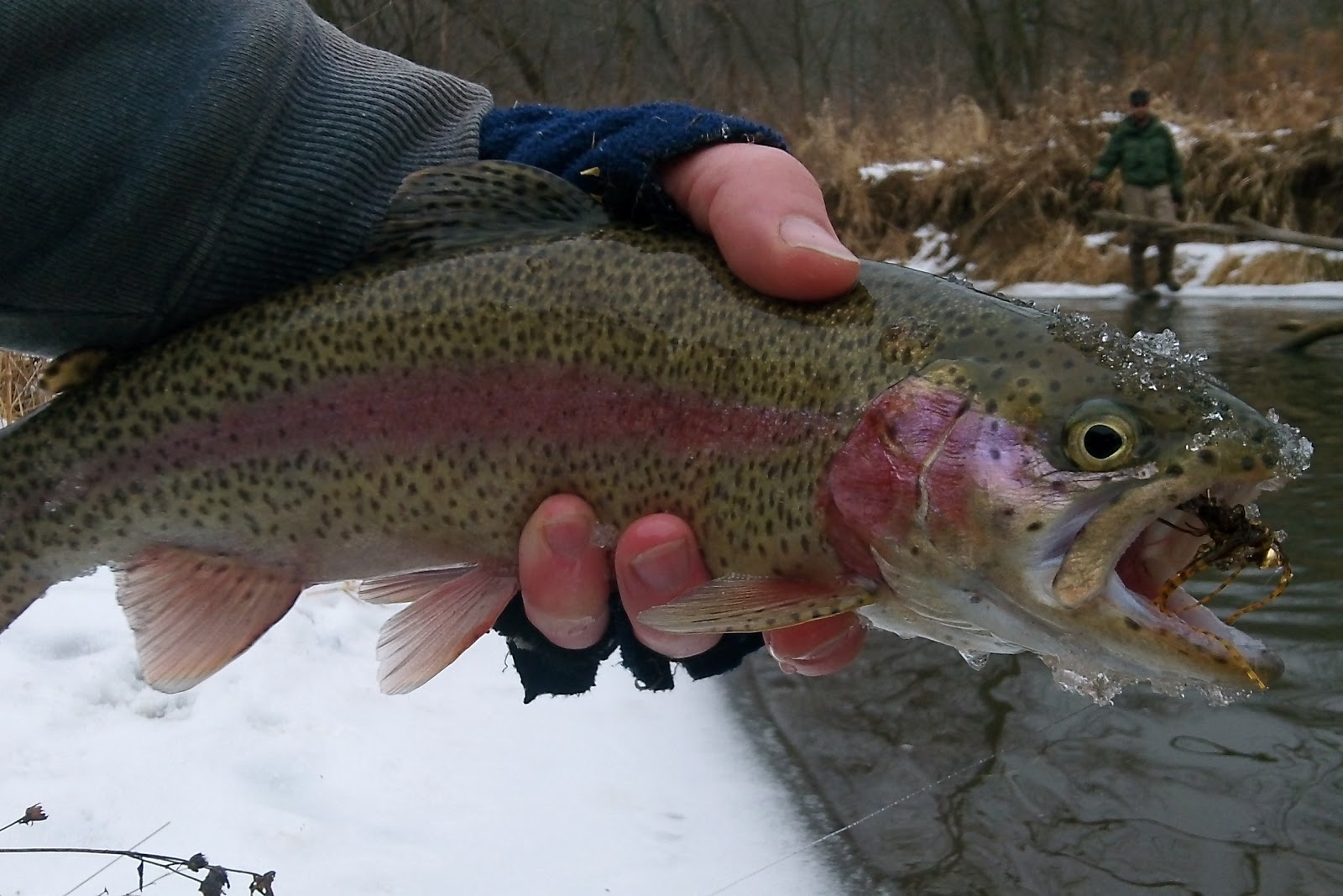 Currents forget what you ve been told about winter trout for Winter trout fishing