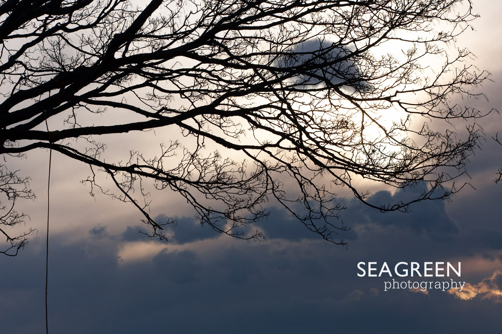 Tree Swing Silhouette - Sea Green Photography Rhode Island