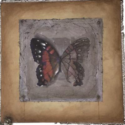Mariposa cautiva