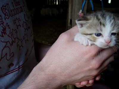 holding cute kitten