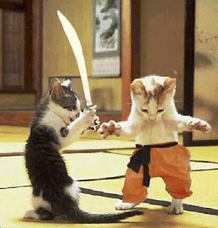 Funny Cats Fighting