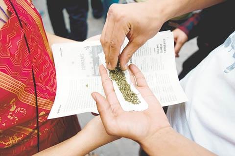 Marihuana en Bolivia