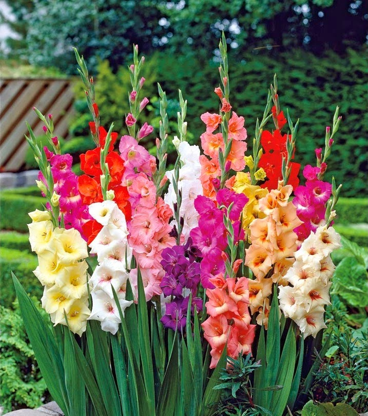Imagenes de flores exoticas con sus nombres - Flores tropicales fotos ...