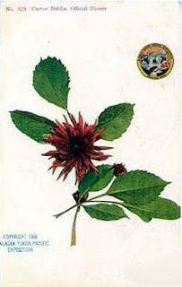 official AYP postcard of cactus dahlia
