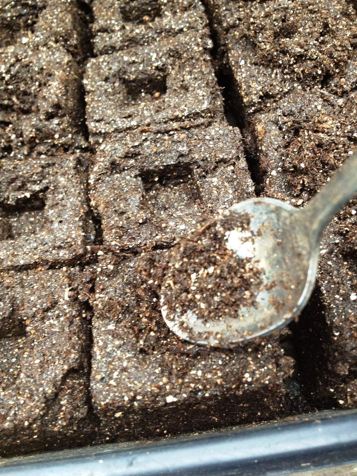 Down to earth the perfect soil block for Soil borne diseases