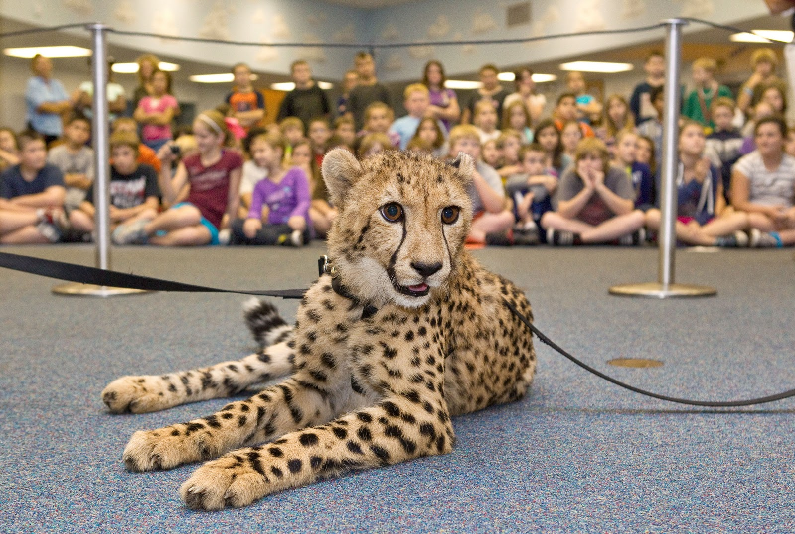 TPA Quick Take: Busch Gardens Cheetah Visits Local Schools for Great ...