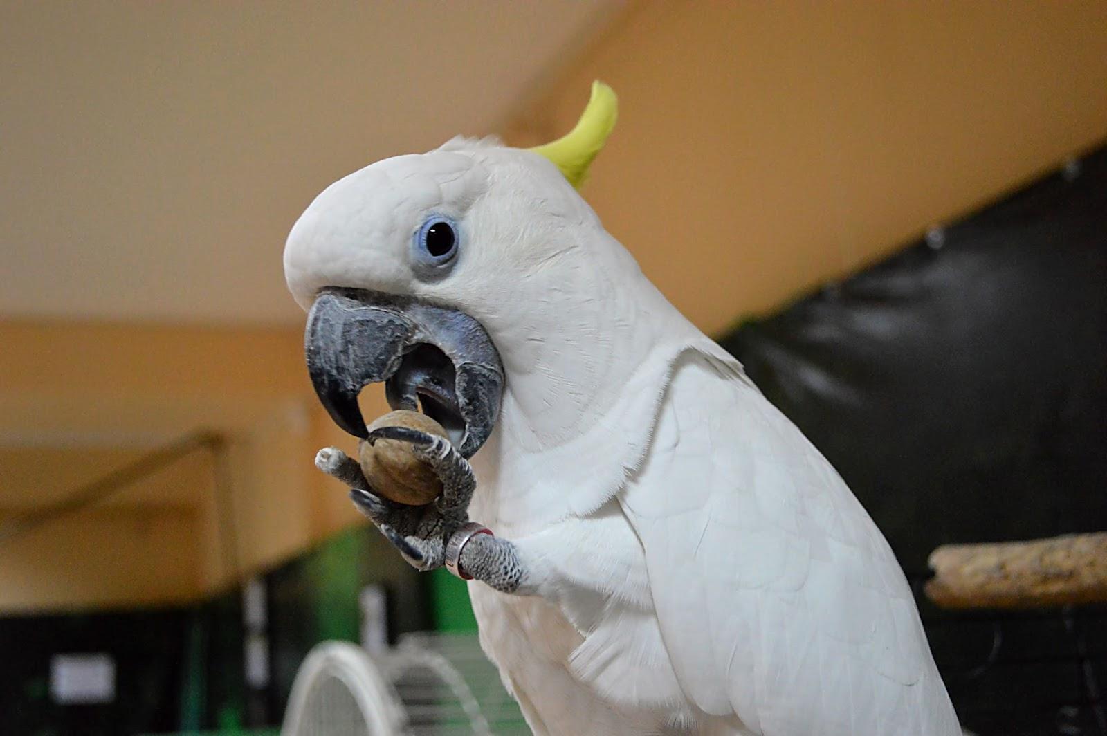 Настоящие попугаи триба фото 4