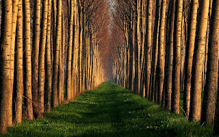 Trees Road wallpaper