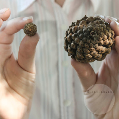 Acorn and Pine Cone