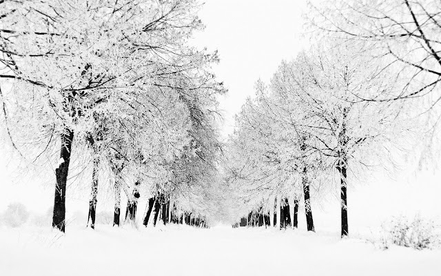 Beautiful Winter Wallpapers