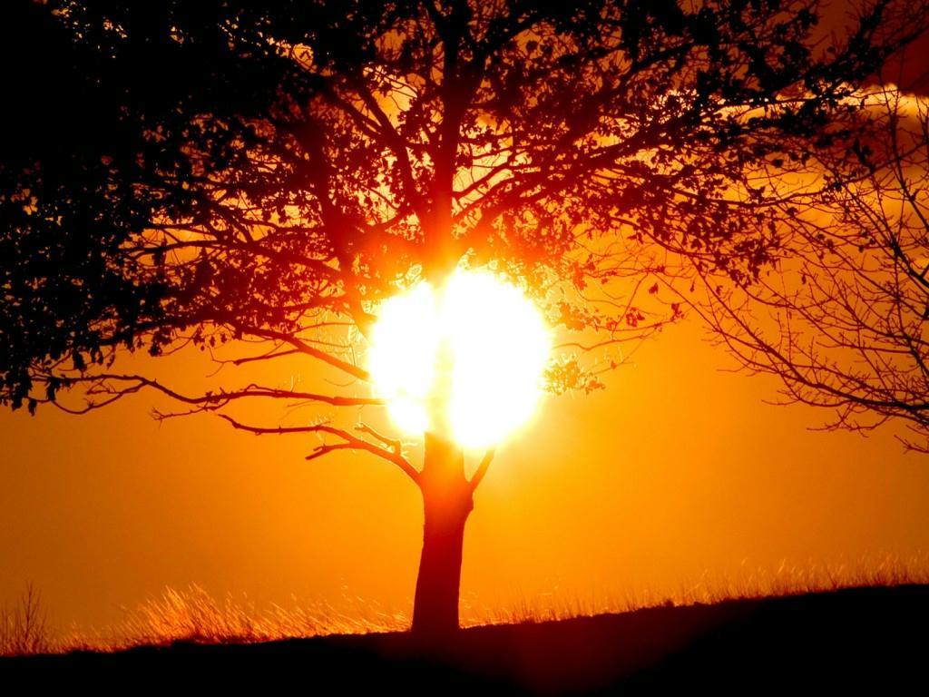 Día Internacional Sol