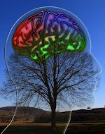 Denk-Optimierung