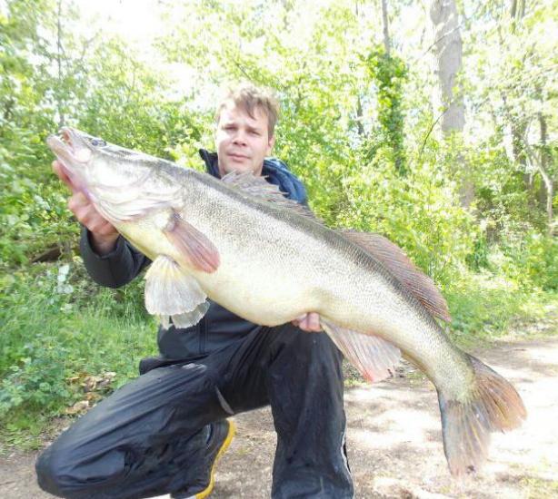 Freshwater fish zander coarse fishing game fishing for Big 5 fishing