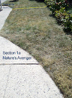 Lawn Section 1a after spraying with Nature's Avenger