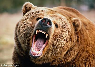 oso ataca devora