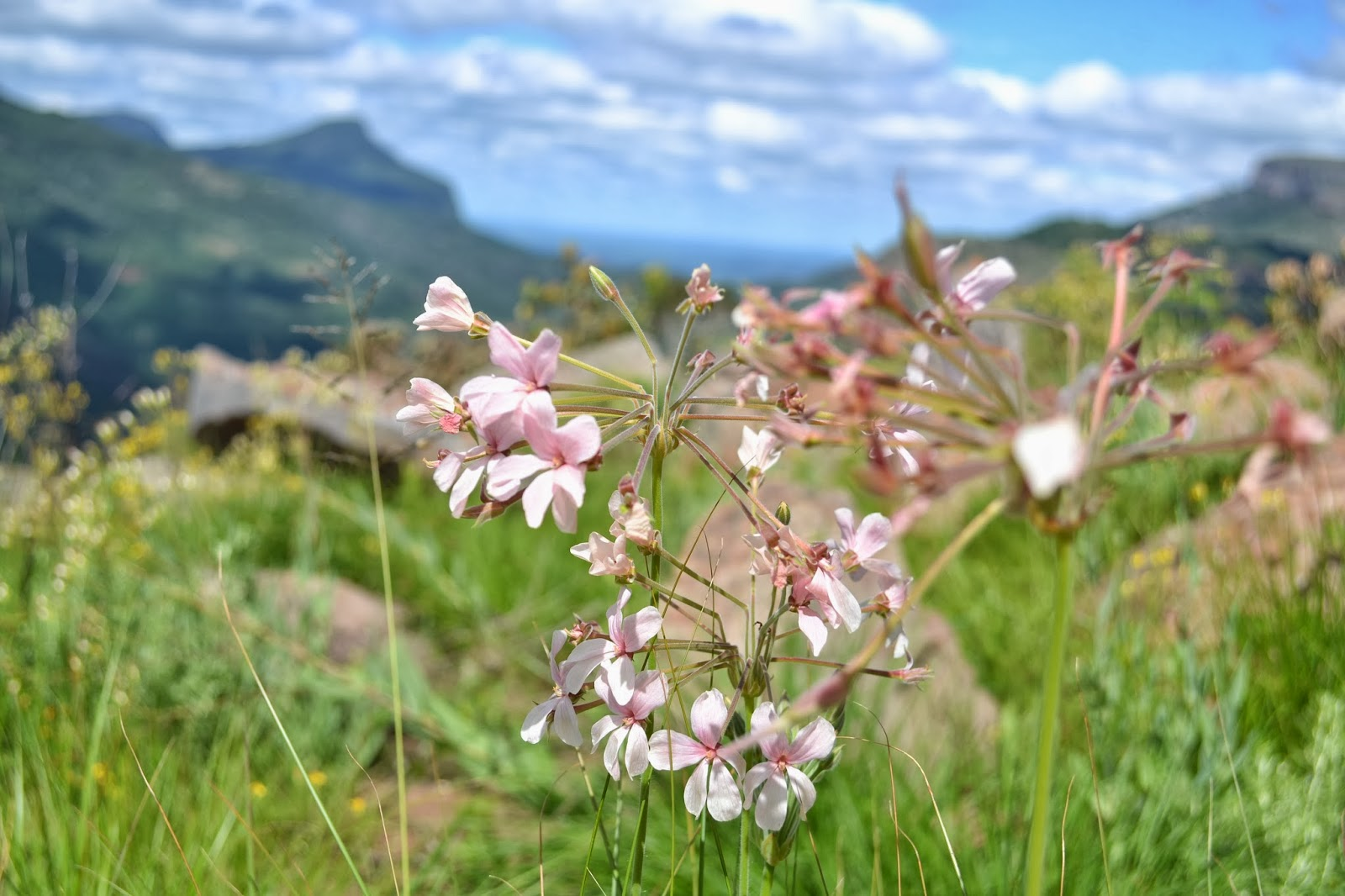 Pink flowers mountain setting