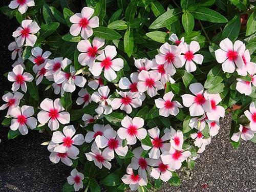 plantas de jardim que gostam de umidade : plantas de jardim que gostam de umidade:Mania de Verde: Flores da época