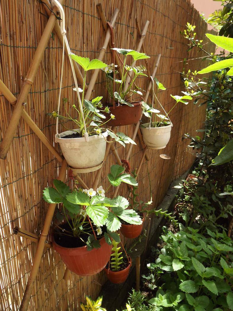 Sviluppo verticale 25mq di verde for Vasi per fragole