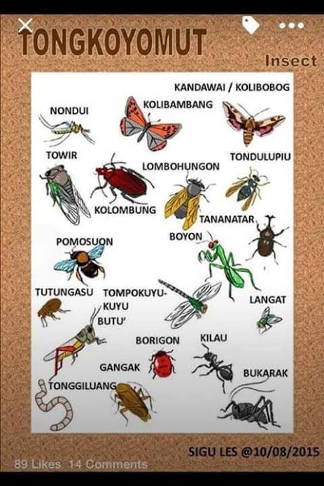Mari belajar Bahasa Kadazan Dusun - Nama Serangga