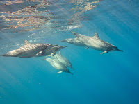 http://www.tropicallight.com/water/dolphins/04jan14dolphins/04jan14dolphins.html