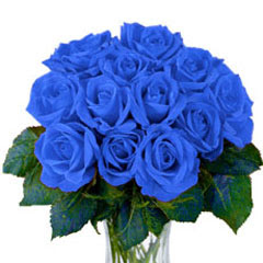 Rangkaian Bunga mawar biru