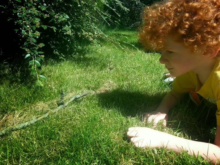 Barny Bear's Little Adventure - Rabbit eye view of garden
